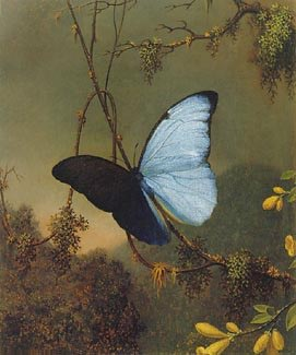 Blue Morpho Butterfly (c1864-65) by Martin Johnson Heade